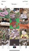 ✅ Account Verified 99.2K Followers – 636K Likes – Pet & Animal Channel Channel