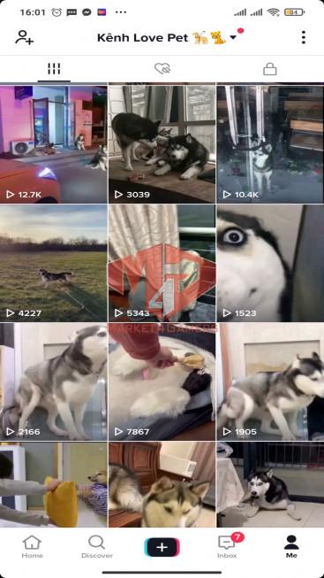 ✅ Account Verified 353.1K Followers – 4M1 Likes – Pet & Animal Channel